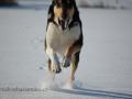 DSC_8994 FALCO na sněhu W