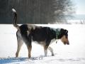 FALCO na sněhu W