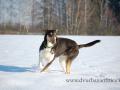 Falco+sníh W