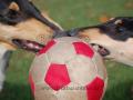 DSC_5407 Falco+míč+Aada