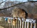 Oldřiška na plotě