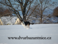 DSC_3247 w Aada na snehu