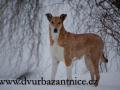 DSC_3090 w Amálka sněžná