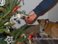 SPU_6753 w Am vánočníé