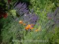 DSC_4995 w zahrada