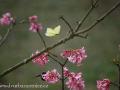 DSC_4526 w motýl
