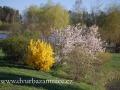 DSC_5497 w zahrada