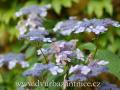 DSC_7441 w zahrada