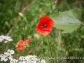 DSC_7454 w zahrada