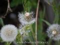 DSC_5689 w zahrada