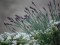 DSC_5691 w zahrada