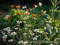 SPU_1785 w zahrada - jednoduchá krása