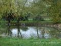 SPU_5499 w spojovací rybník