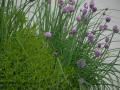SPU_2528 w bylinky