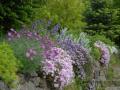 SPU_2572 w zahrada