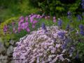 SPU_2575 w zahrada