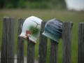 SPU_2917 w hrnky na plotě