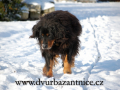 DSC_3216 w B na snehu