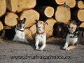 DSC_3931 w smečka u dřeva