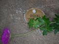 DSC_8422 w Brixi
