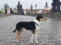 Cabernet v Praze