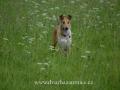 SPU_3821 w Donutka v trávě