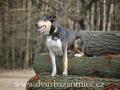 DSC_3951 w Falco na dřevě