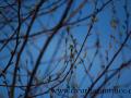 DSC_2536 W příroda