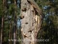 DSC_5213 w příroda
