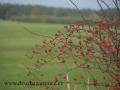 SPU_5612 w příroda - šípky