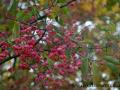 SPU_5668 w příroda