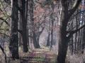 SPU_5792 w příroda