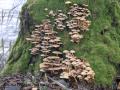SPU_5830 w příroda - houby