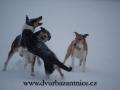 DSC_3076 w hrátky na sněhu o