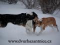 DSC_3086 W hrátky na sněhu