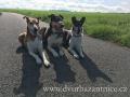 naše psí trio w
