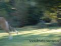 SPU_5017 w když je pes rychlejší