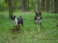 SPU_2629 w Aada+Falco v lese