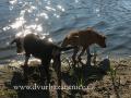 IMG_0450 w š u rybníka