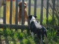 SPU_0832 w kuk přes plot