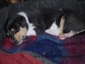 SPU_9879 w Ella spící