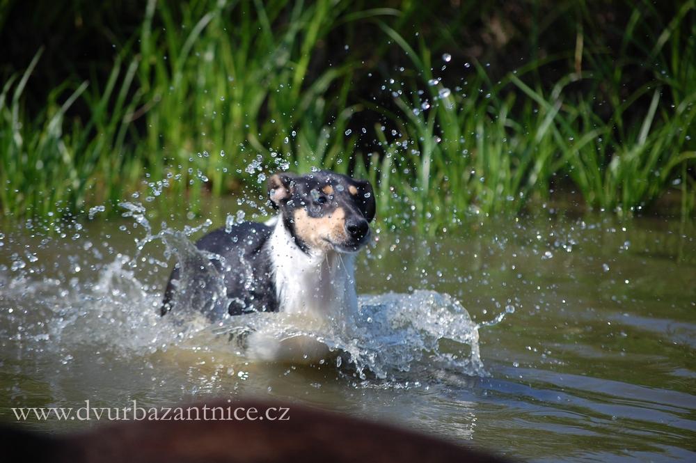 DSC_3075 AADA ve vodě
